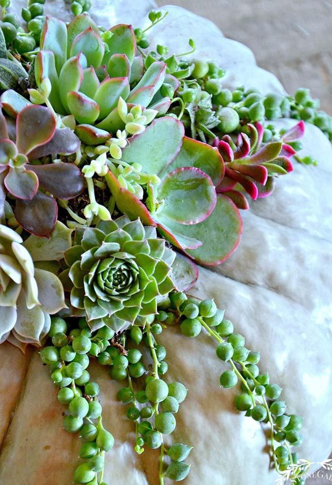 Arrangement of succulents pending
