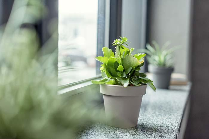 Plant in decoration
