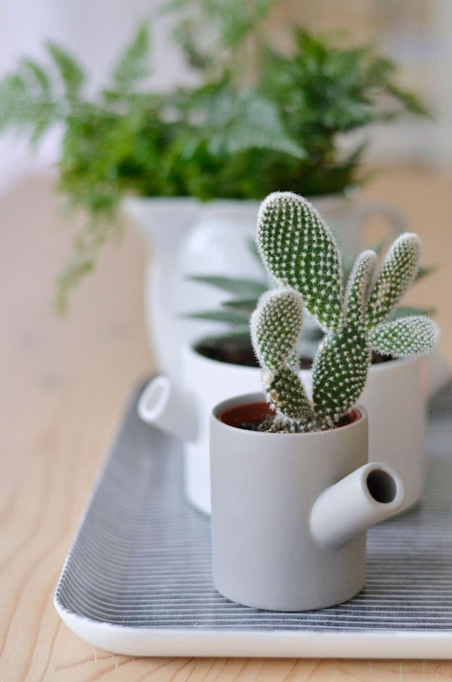 Cacti at home: 60 inspirations to decorate with the 21st floor