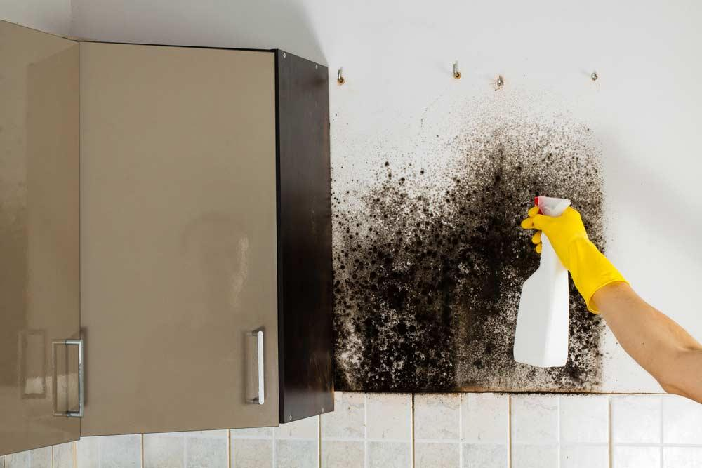 Step by step to clean mold on walls