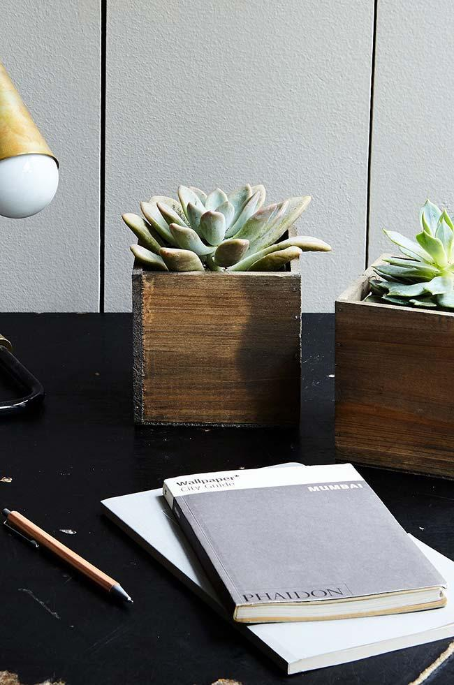 Succulents are ideal for decorating home offices and offices