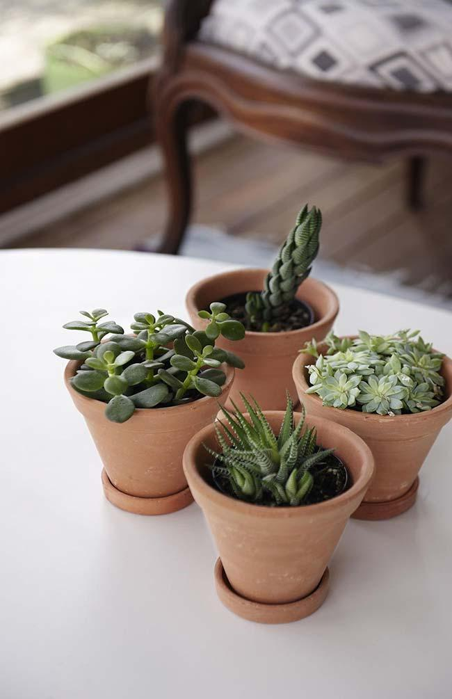 Attention with the succulents planted in clay pots