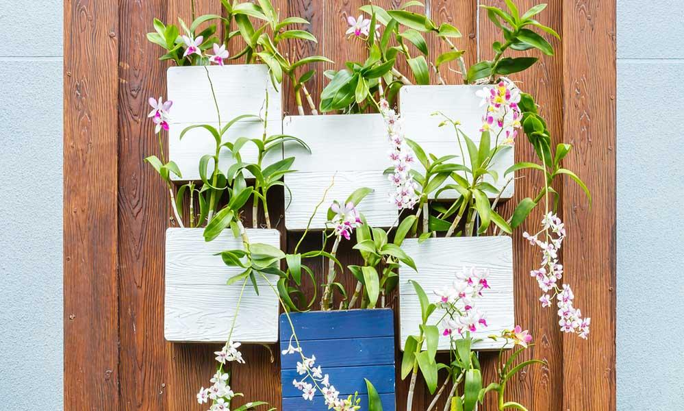 How to Care for Orchids: 5 Essential Tips to Follow 1