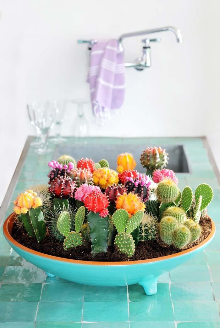 Succulents of many types, shapes and colors