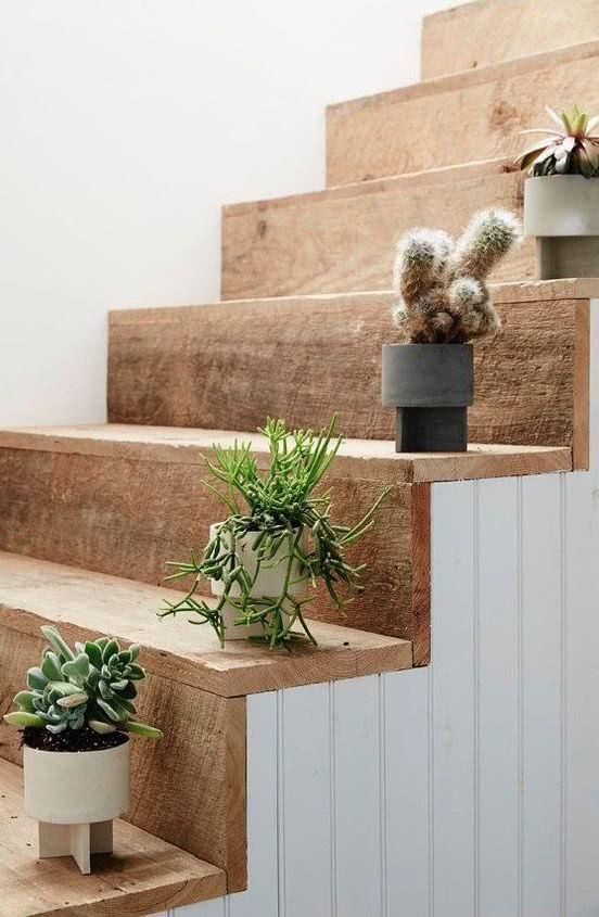 Cacti at home: 60 inspirations to decorate with plant 13