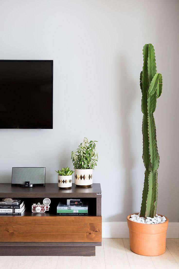 Cacti at home: 60 inspirations to decorate with plant 12