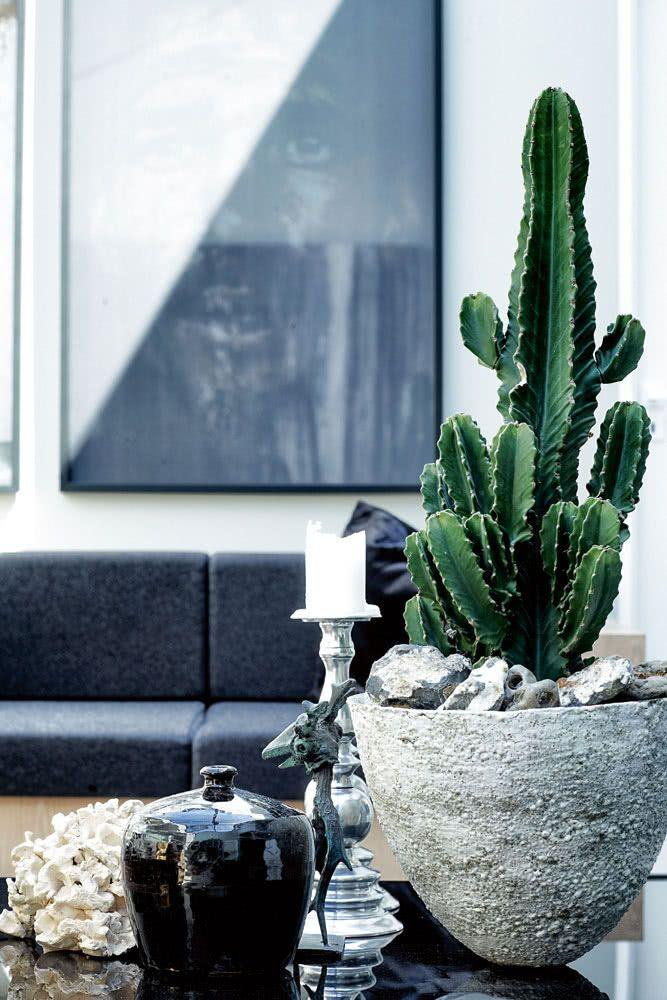 Cacti at home: 60 inspirations to decorate with the 31 plant