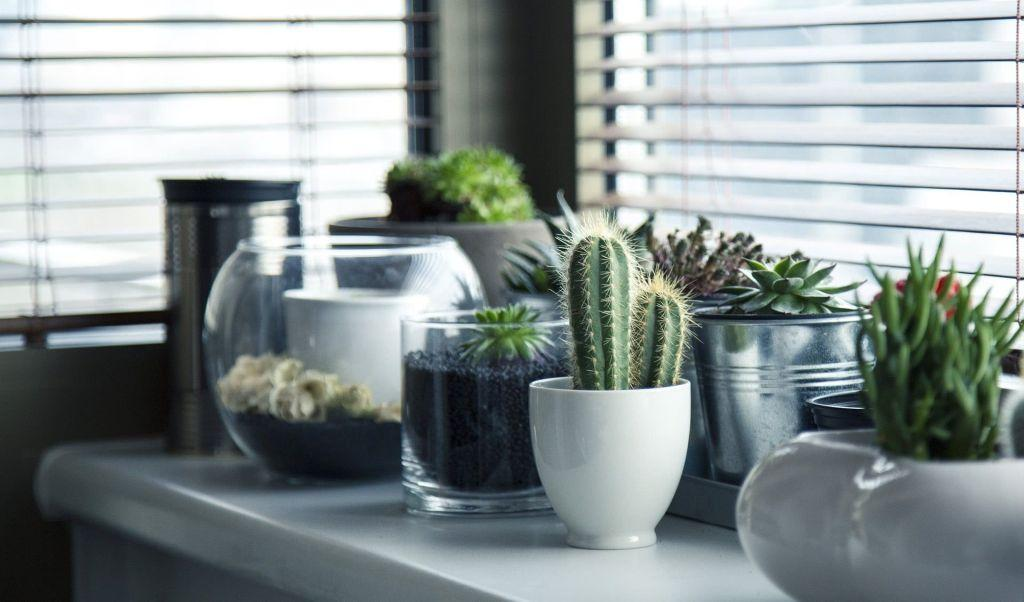 Cacti at home: 60 inspirations to decorate with the 55 plant