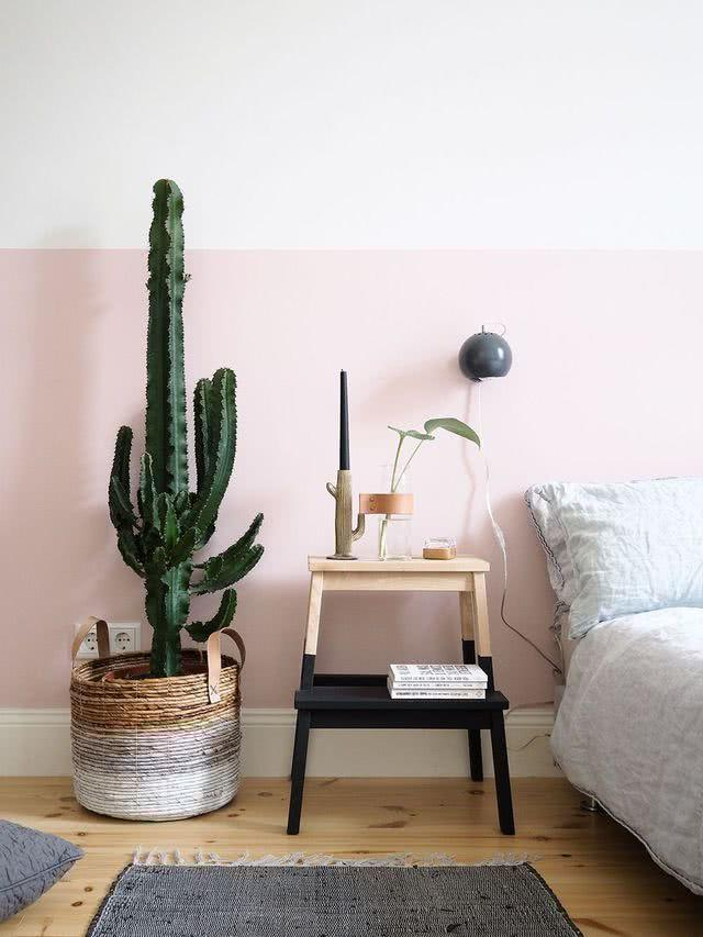 Cacti at home: 60 inspirations to decorate with plant 41