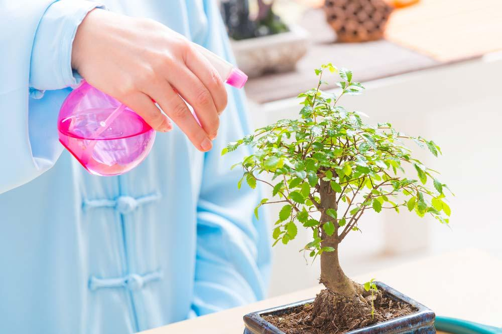 Bonsai watering
