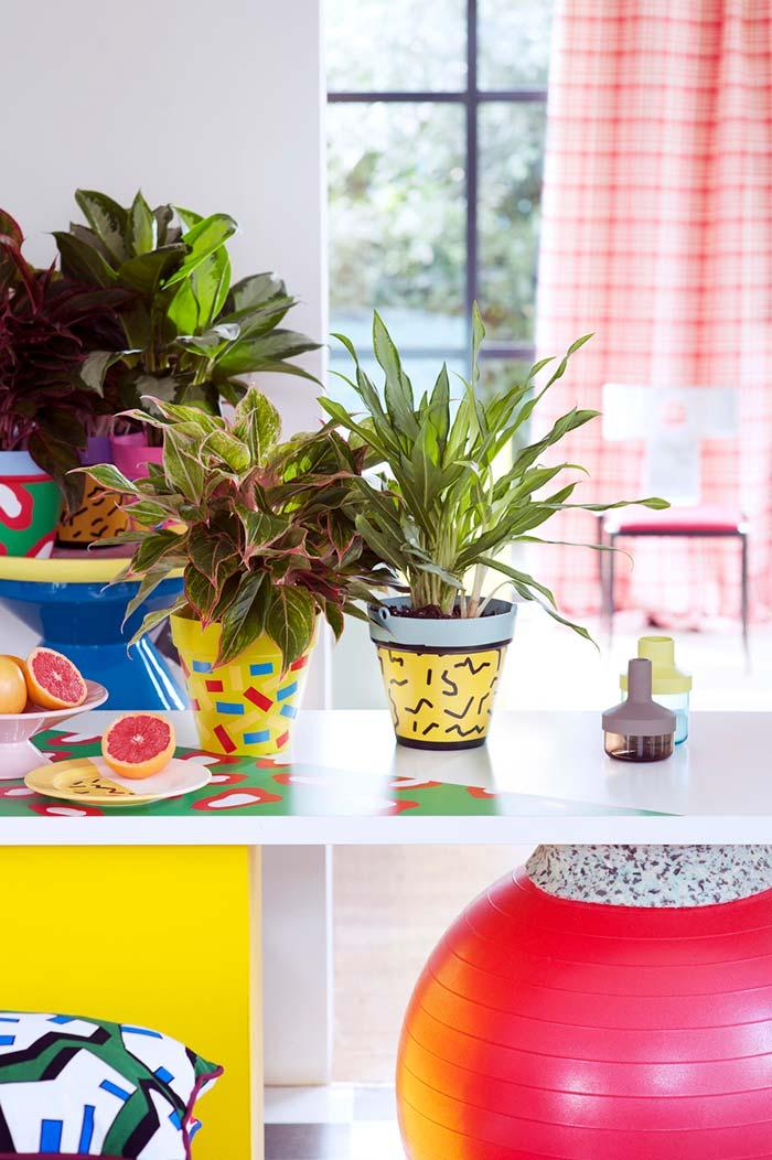 Aglaonema making a cheerful and fun composition