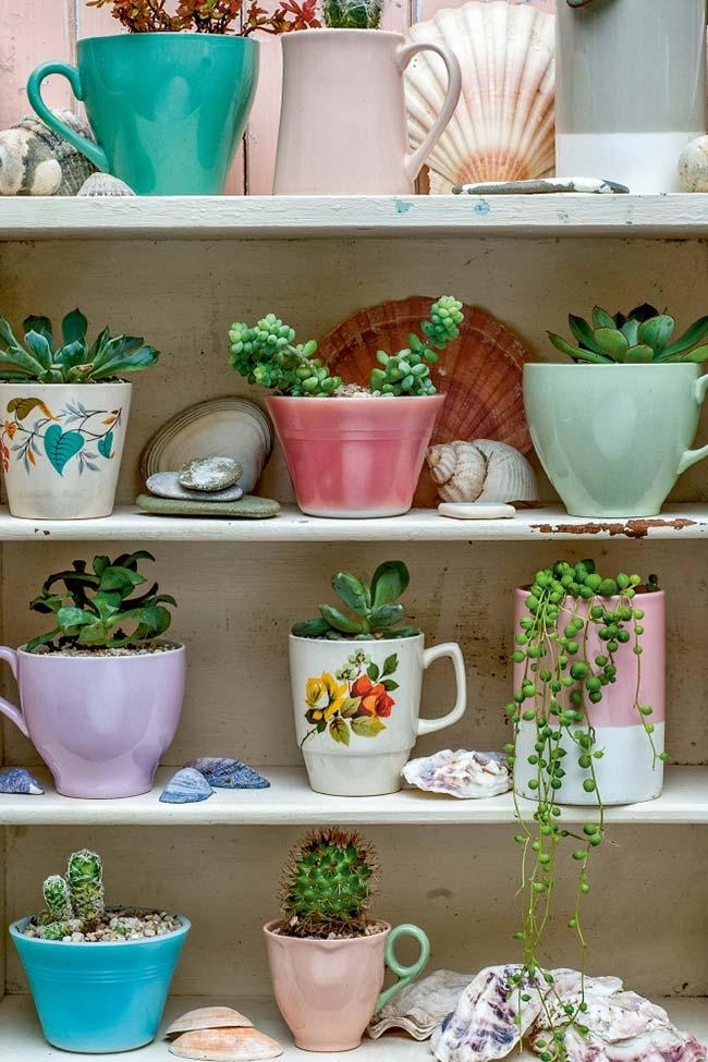 Shelf of succulents planted in cups
