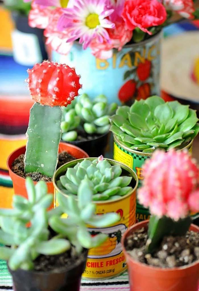 Colored cans with succulents