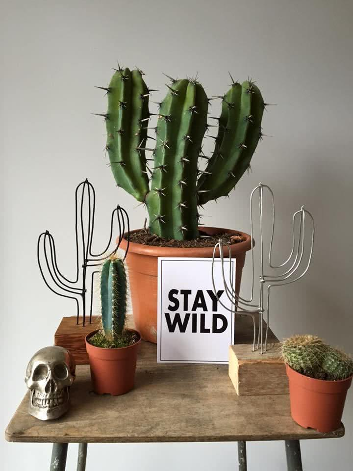 Cacti at home: 60 inspirations to decorate with the plant 20