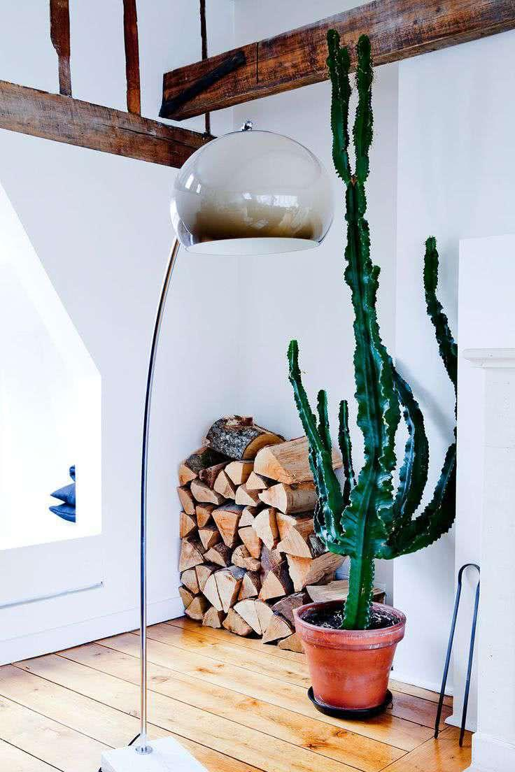 Cacti at home: 60 inspirations to decorate with plant 23