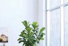 Ornamental plants: 85 photos bring the green to your home