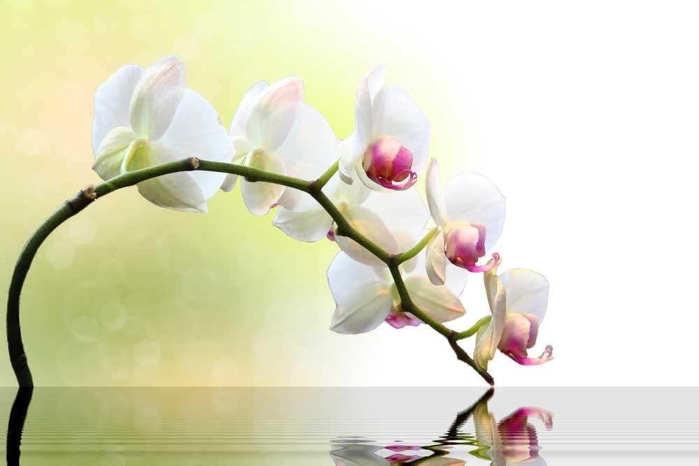 How to Care for Orchids: 5 Essential Tips to Follow 5