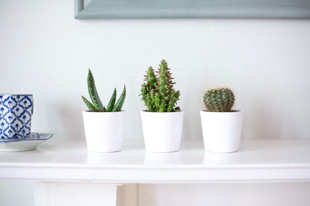 Cacti at home: 60 inspirations to decorate with the plant 51