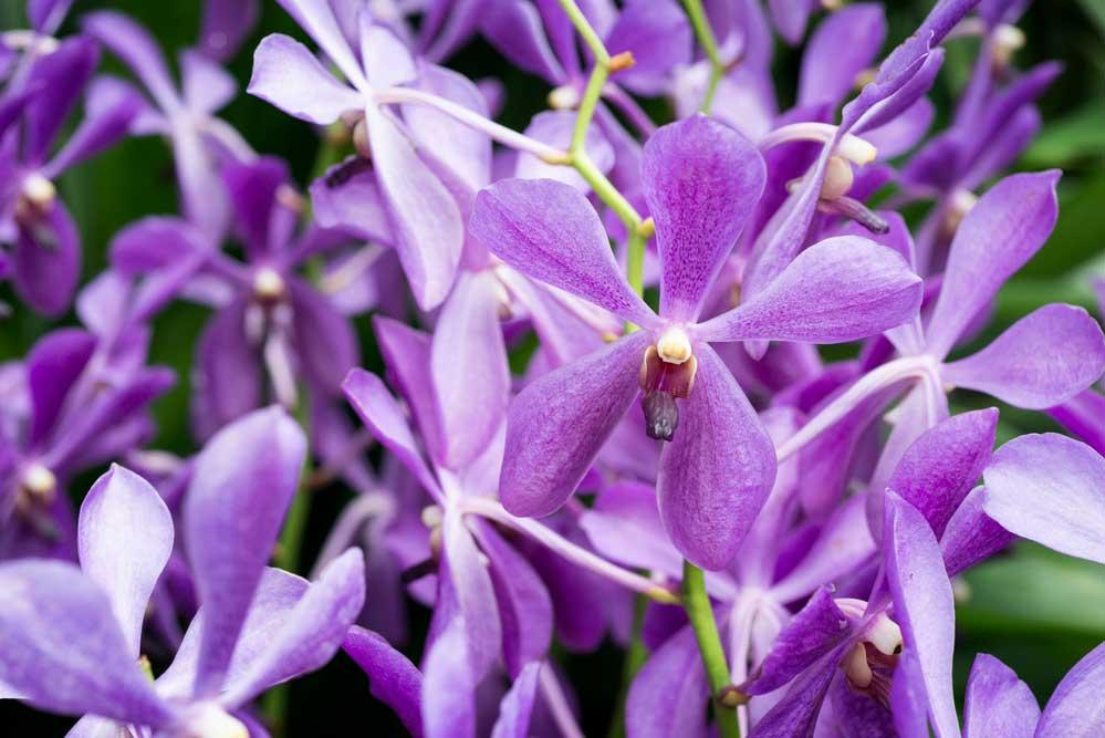 How to Care for Orchids: 5 Essential Tips to Follow