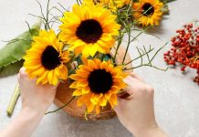 How to Care for Sunflower: Important Tips for Growing the Flower