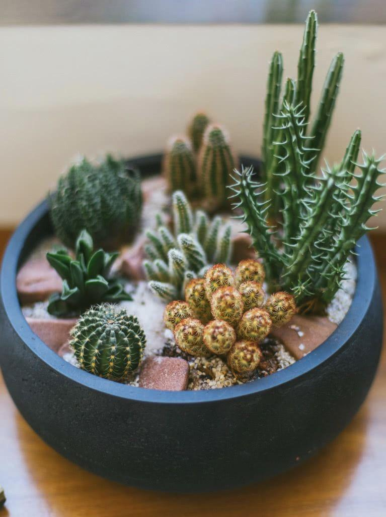 Cacti at home: 60 inspirations to decorate with the 9th floor