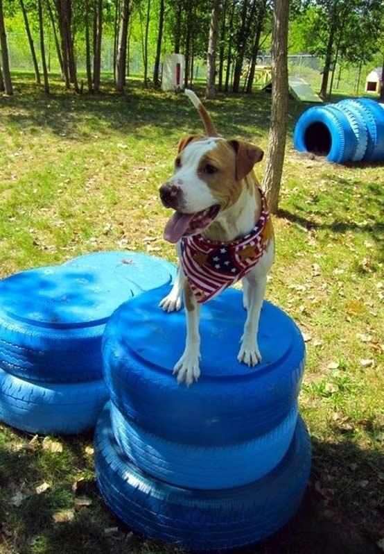 To train and exercise your pets