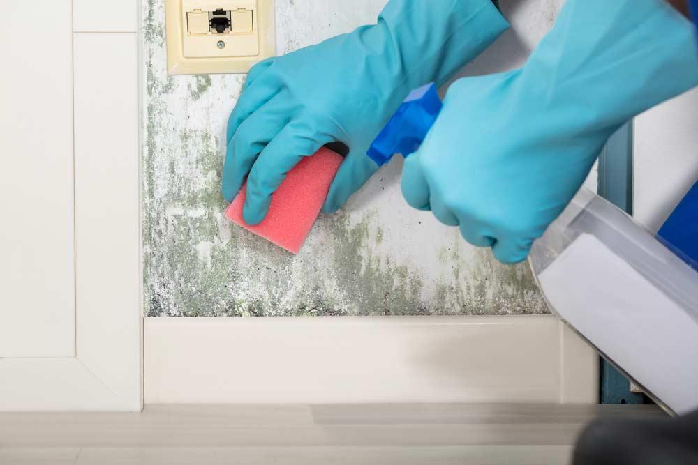How To Get Mold Smell: Homemade Tips To Eliminate The Problem