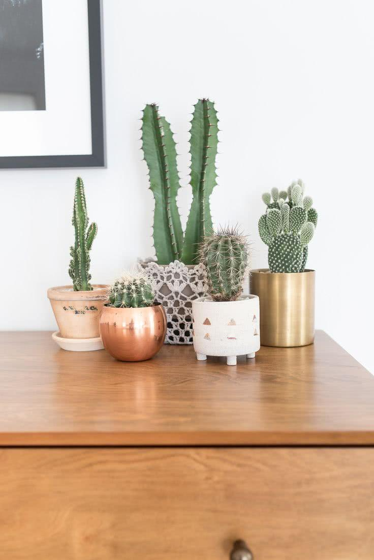 Cacti at home: 60 inspirations to decorate with plant 2
