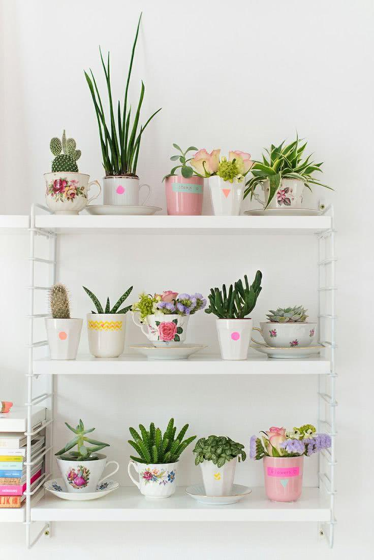 Cacti at home: 60 inspirations to decorate with the 27 plant