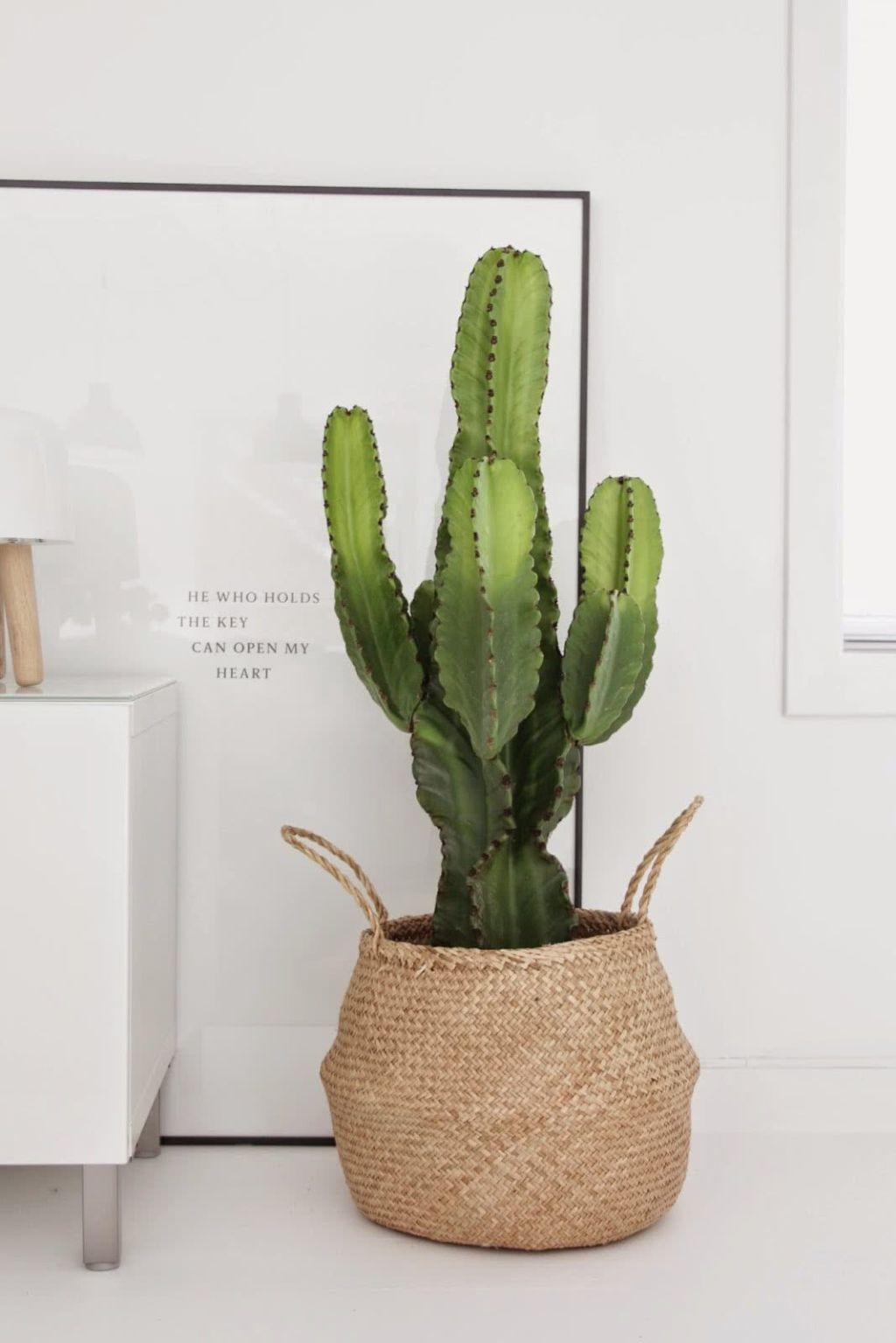 Cacti at home: 60 inspirations to decorate with the plant 15
