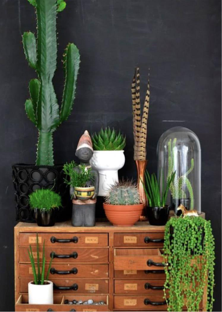 Cacti at home: 60 inspirations to decorate with plant 1