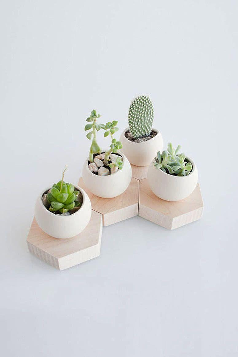 Cacti at home: 60 inspirations to decorate with the plant 49