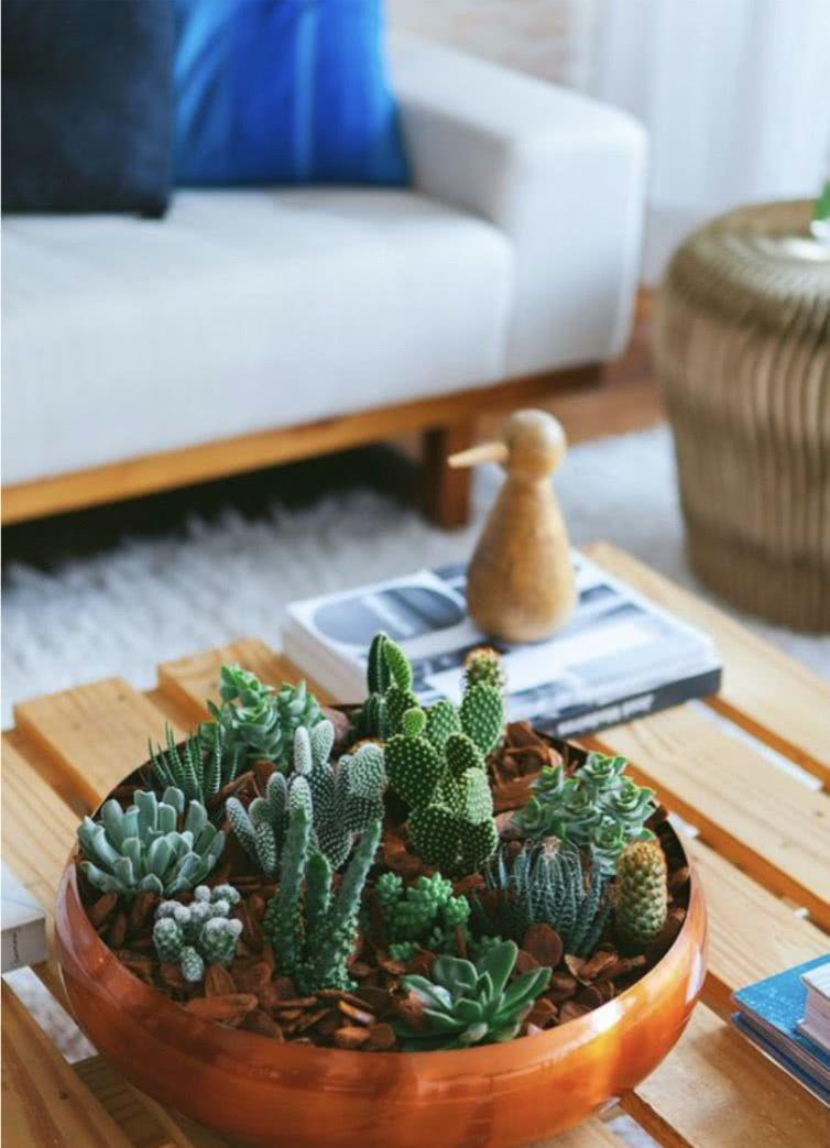 Cacti at home: 60 inspirations to decorate with plant 4