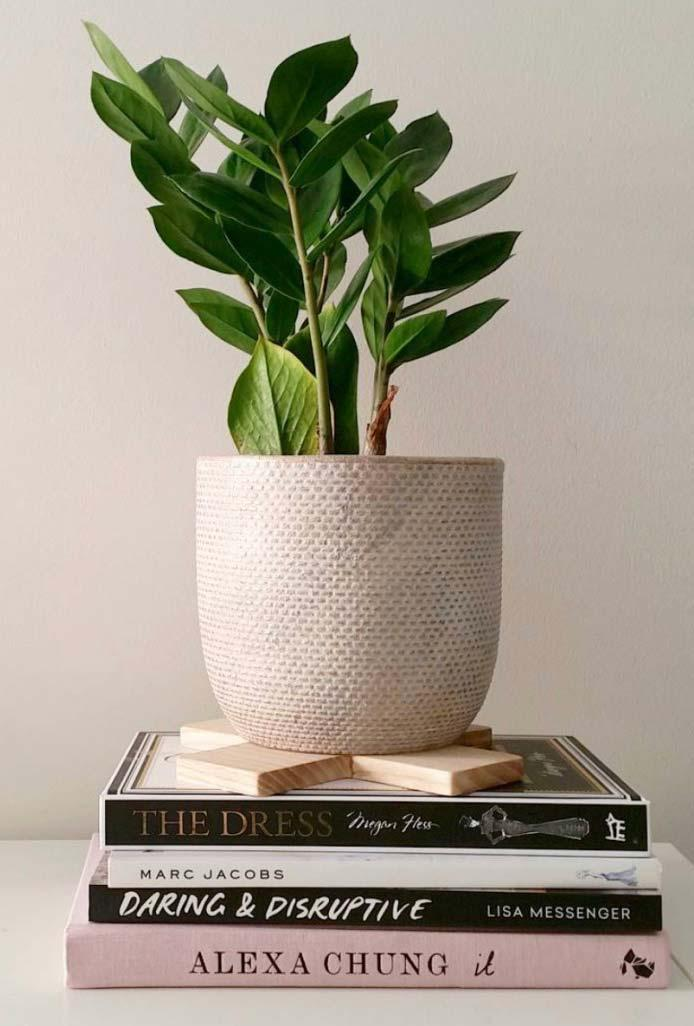 Vase of zamioculca on books