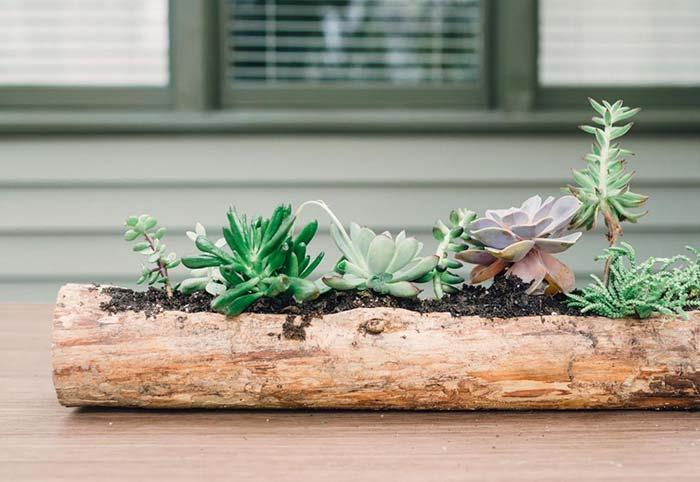 Rustic and natural idea to plant succulents