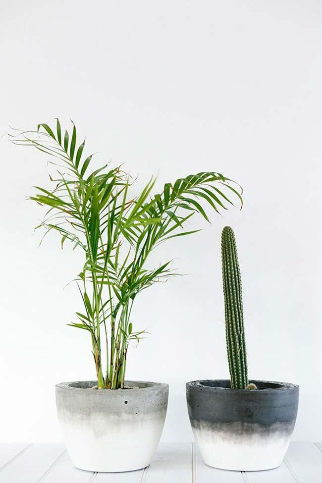Cactus and mini bamboo areca in cement pot