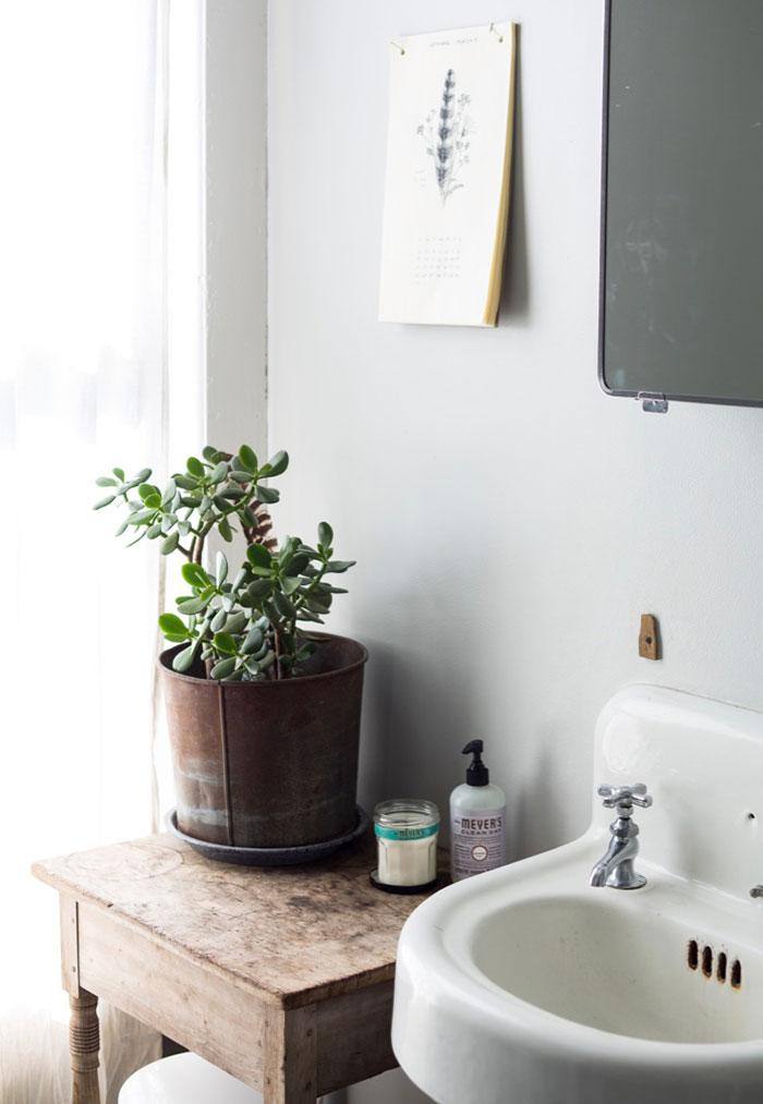 Rustic and retro style bathroom decorated with pot of zamioculca