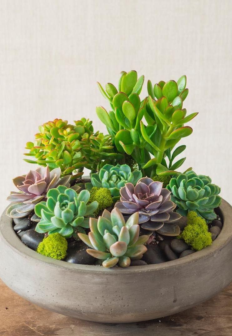 Stones and succulents make a beautiful composition in this pot