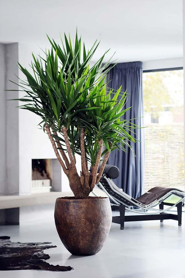 Beautiful vase to enhance the decoration with raffia palm