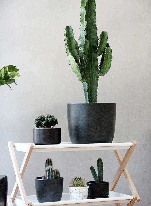 Cacti at home: 60 inspirations to decorate with the plant 48