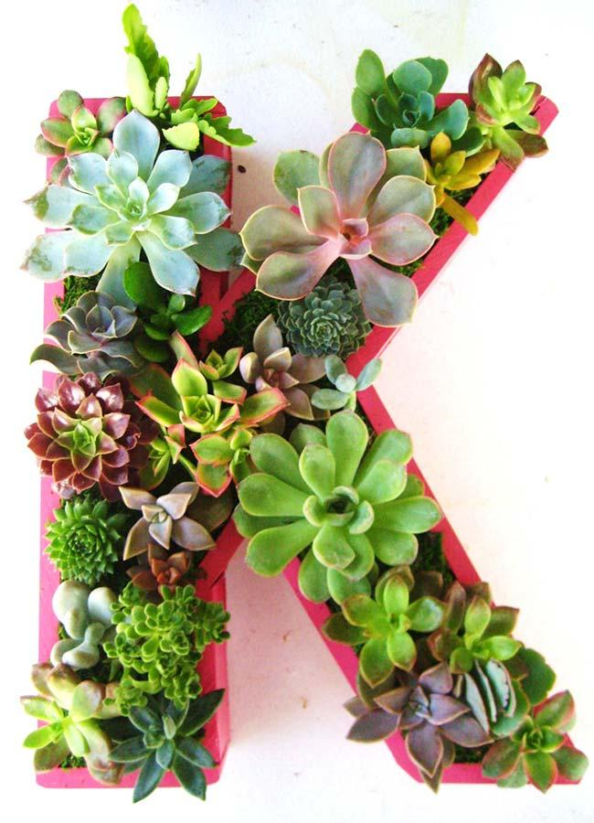 Different sizes, colors and species of succulents