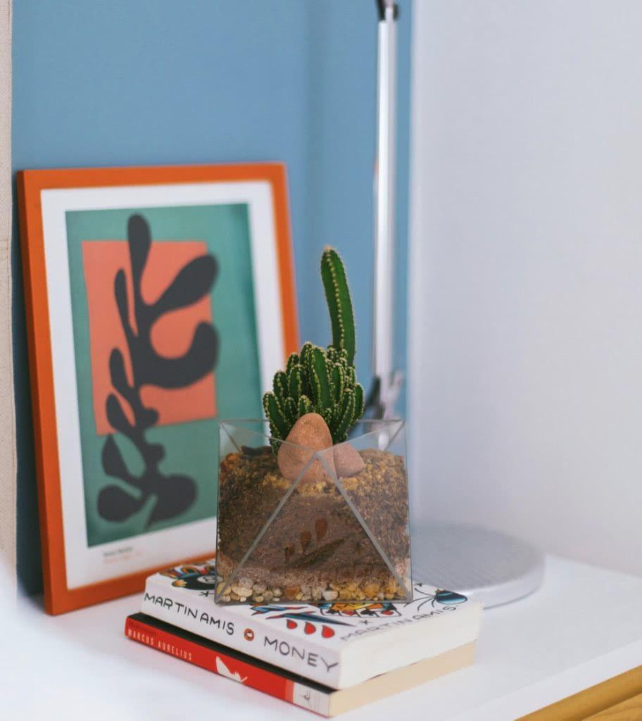 Cacti at home: 60 inspirations to decorate with the 10 plant