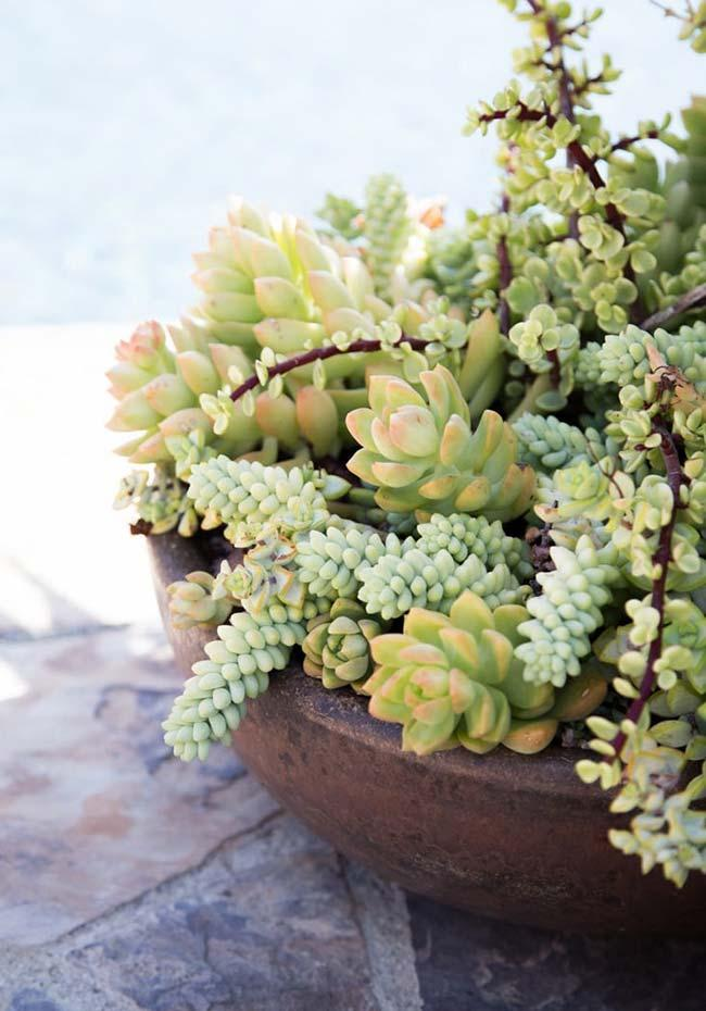For larger areas, choose larger pots that can even receive more varieties