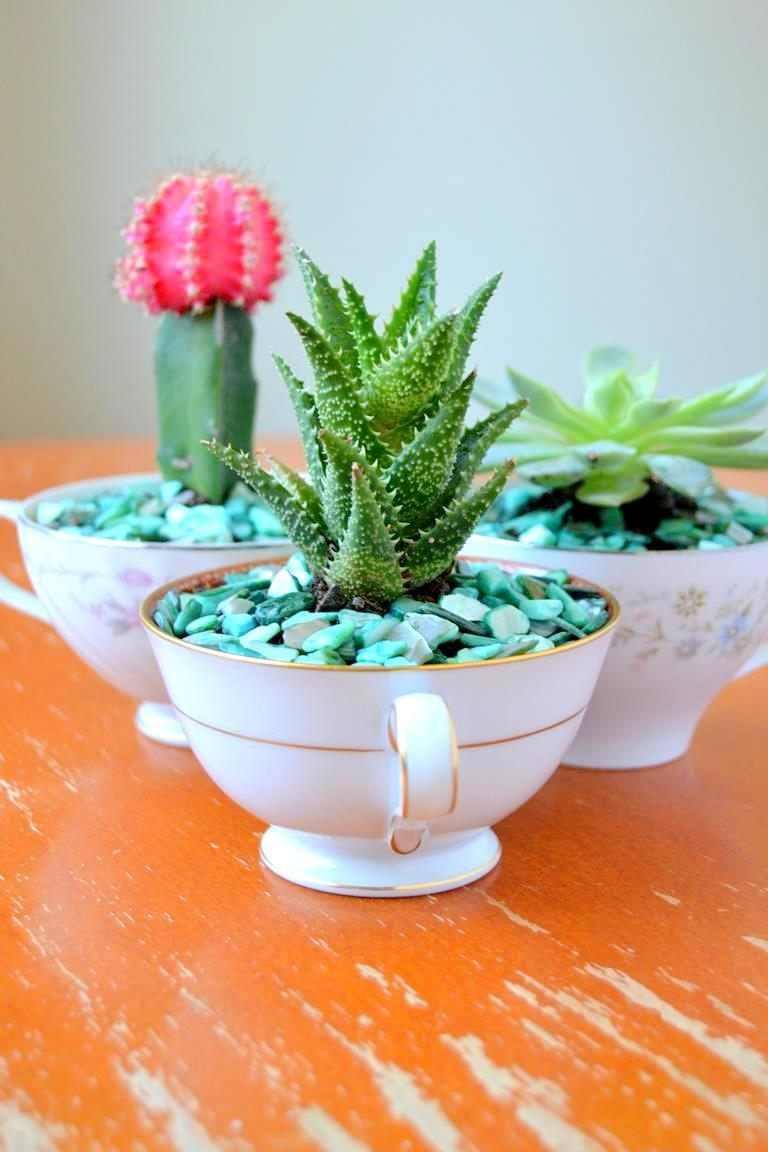 Turn those cups that have been left alone into beautiful vines to the succulents