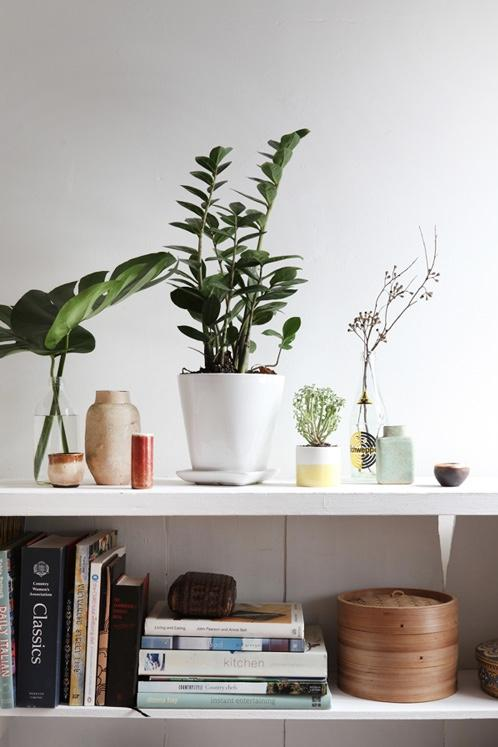 Green corner with shelves