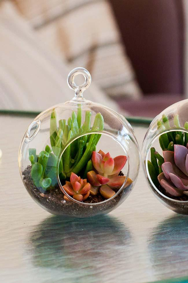 Variety of colors and formats allows creation of creative and always original terrariums