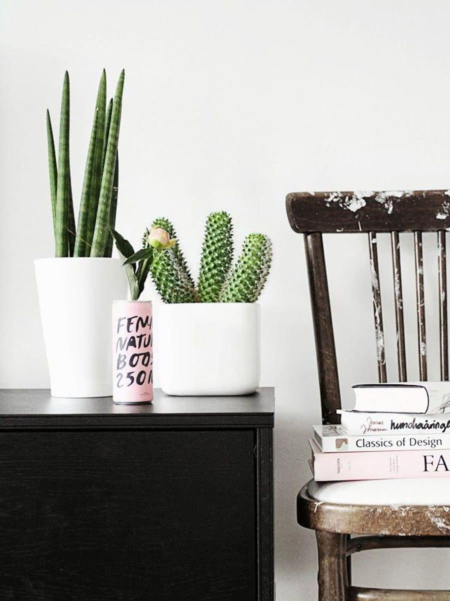 Cacti at home: 60 inspirations to decorate with the plant 38
