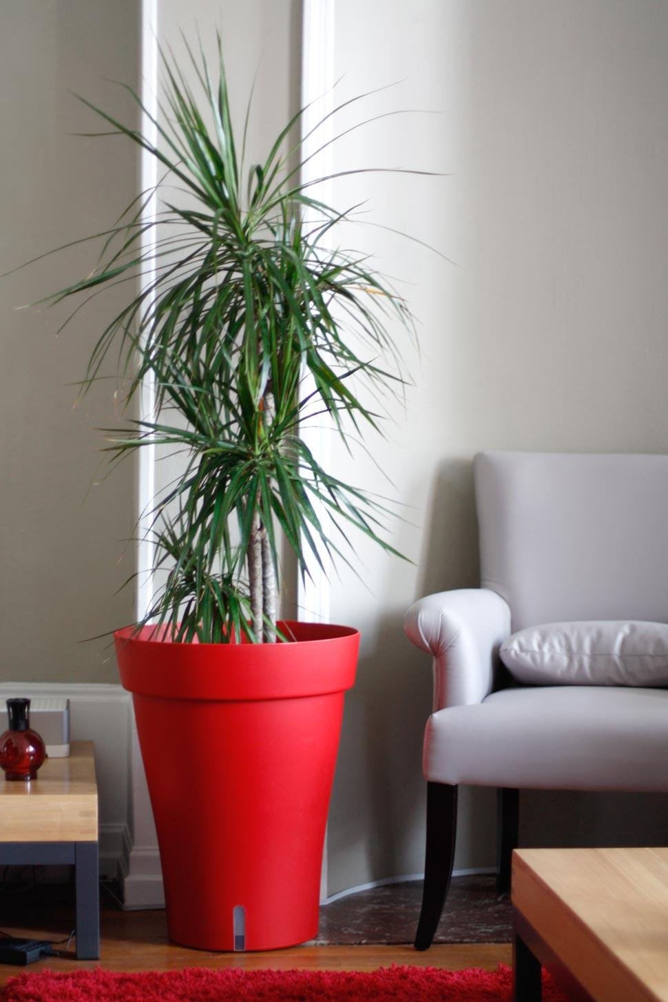 Red vase highlights the colors of the raffia palm