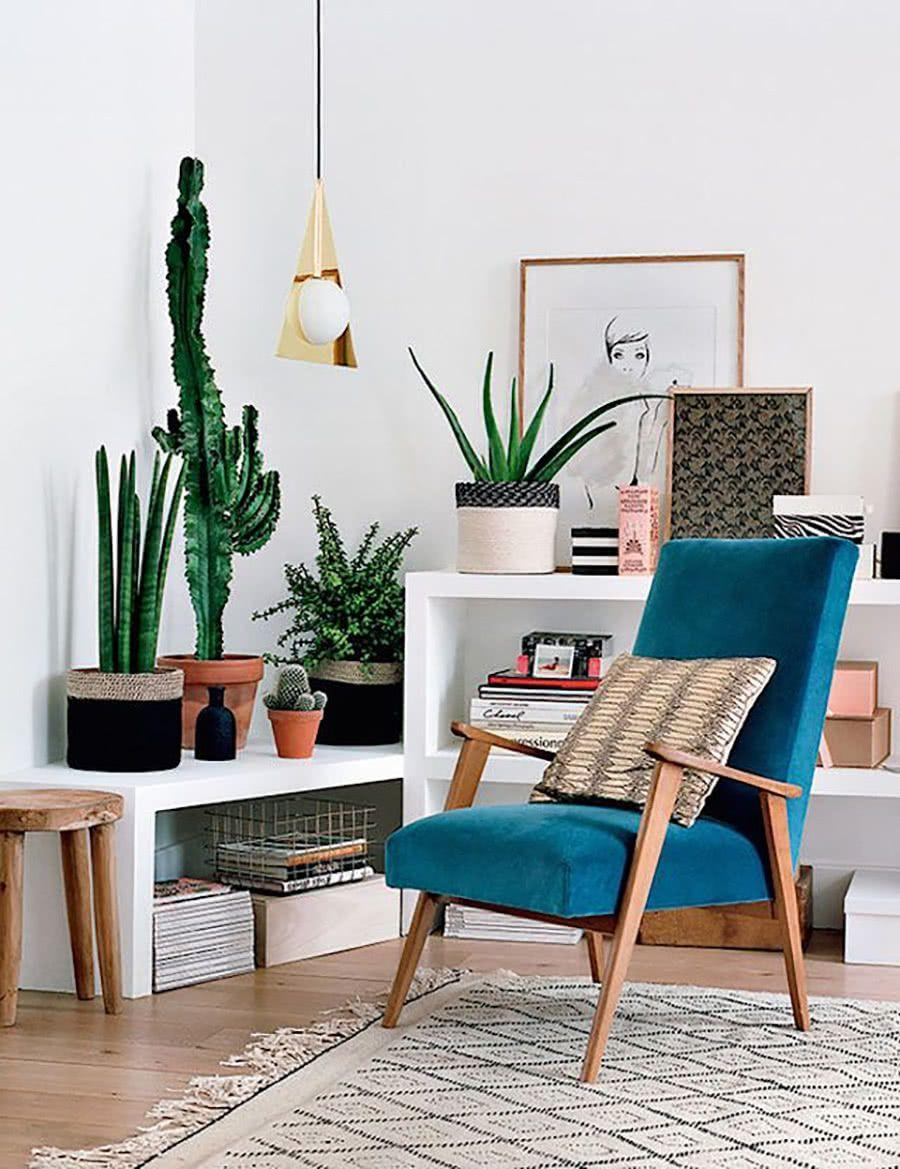 Cacti at home: 60 inspirations to decorate with the 37th floor