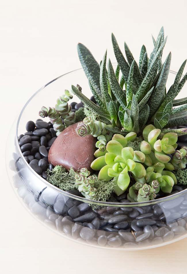 Glass vases allow better visualization of the succulents inside